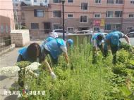 1080.白菊社区清理花坛杂草 扮靓小区环境