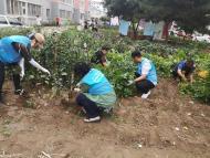 1088.白川社区百人拔菜种花活动助力创城